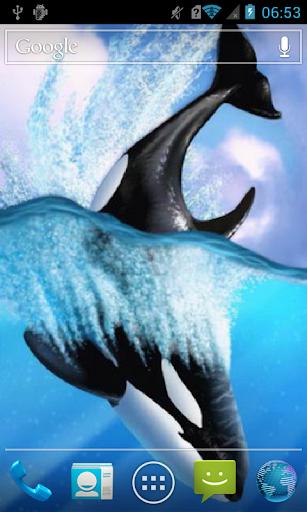 Killer whale Live WP