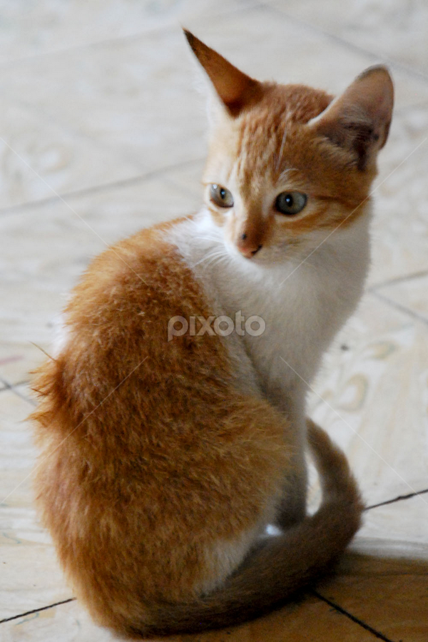 by Emil Zion Punzalan - Animals - Cats Kittens
