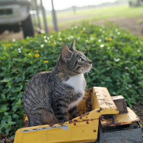 Mr Twiggles and the Dump Truck by Stacey Witherwax - Animals - Cats Portraits