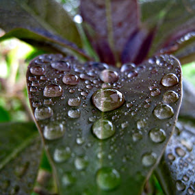 Showered Leaves by Ad Blessings - Abstract Macro