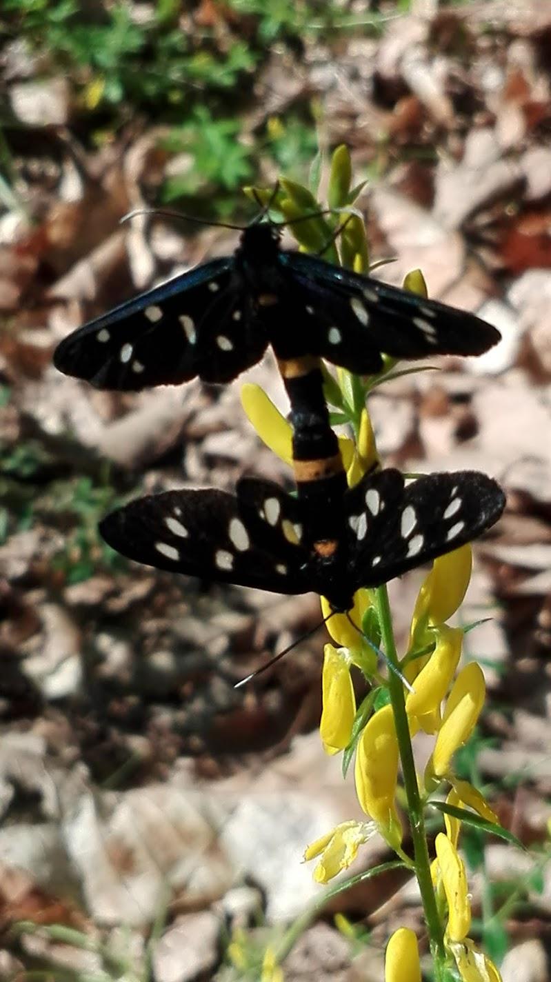 Farfalle innamorate  di FLORANS