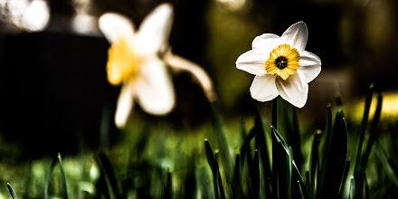 Photo: 14.04.05 - floral