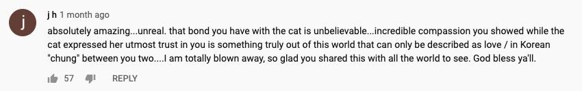 cat comment 2