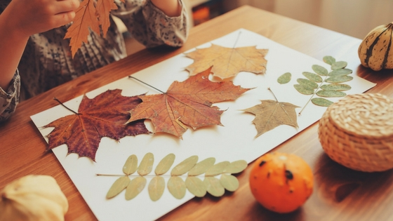 Thanksgiving placemats featuring leaves.