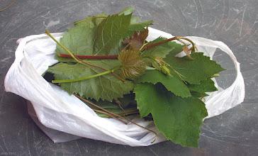 Photo: Liście, wąsy i młode pędy winogron (44)