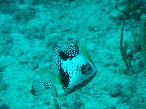 Photo: Box Fish