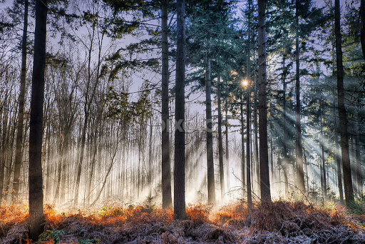 Morning Light In The Forest By Egon Zitter   Landscapes Forests ( Cold,  Forest,
