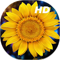 Sunflower Live Wallpapers HD icon