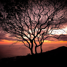 Spiritual Tree by Kazuki Nakamura - Landscapes Sunsets & Sunrises ( clouds, inspiring, tree, california, sunset, cloudy, ocean )