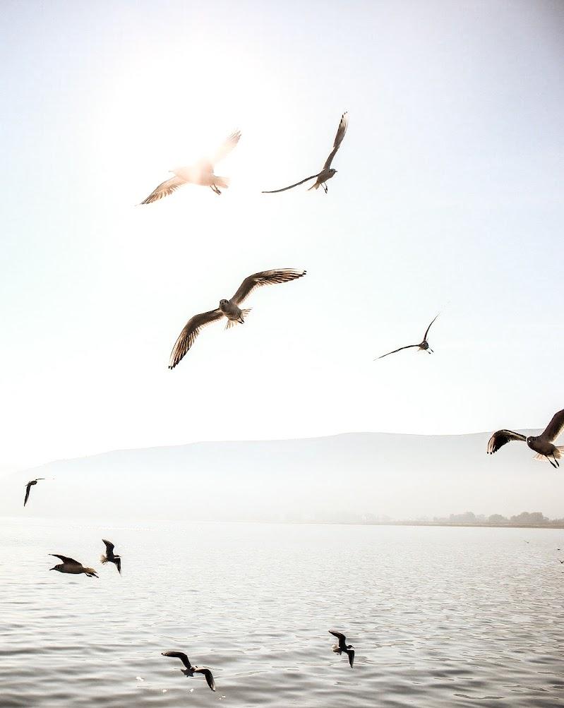 Il volo di ytse_jam