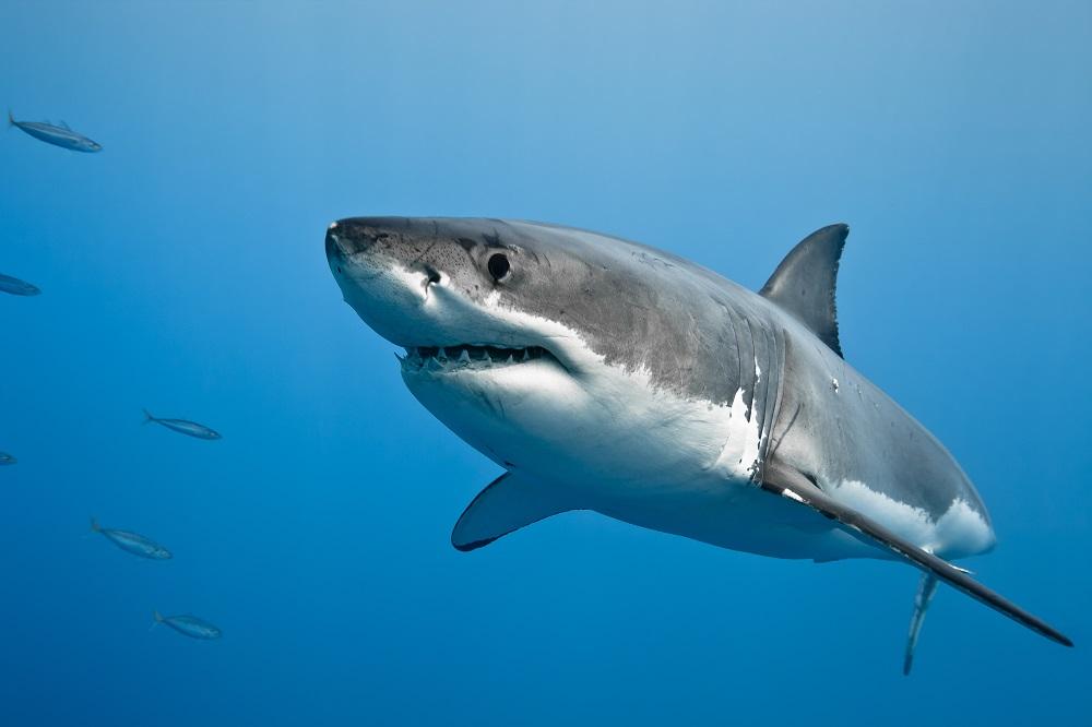 Shark attacks surf ski paddler at popular East London beach - SowetanLIVE