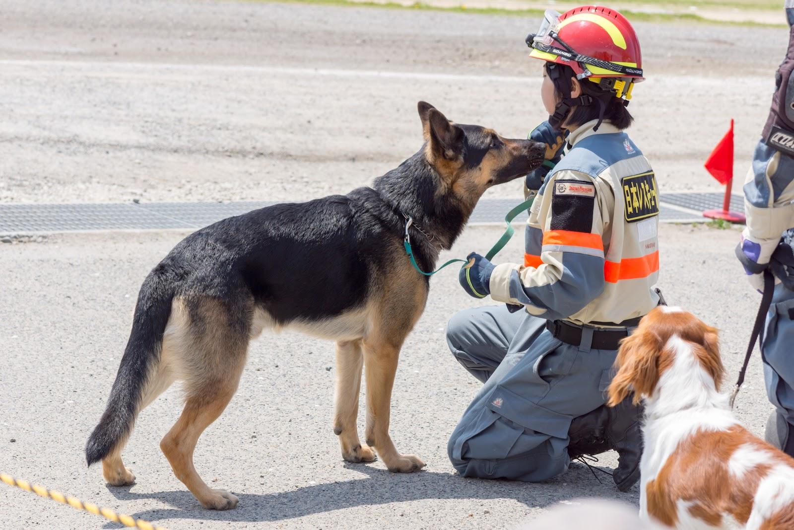 Image result for rescue dog