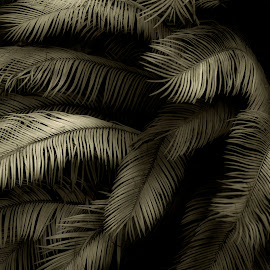 palms by Jim Oakes - Nature Up Close Other Natural Objects ( plams, leafs, black and white, day )