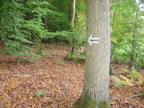 Photo: Na drzewach zielenił się zielony szlak. Jego staraliśmy się trzymać ze wszystkich sił.
