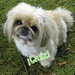 Todo sobre Perros - Quiz Icon
