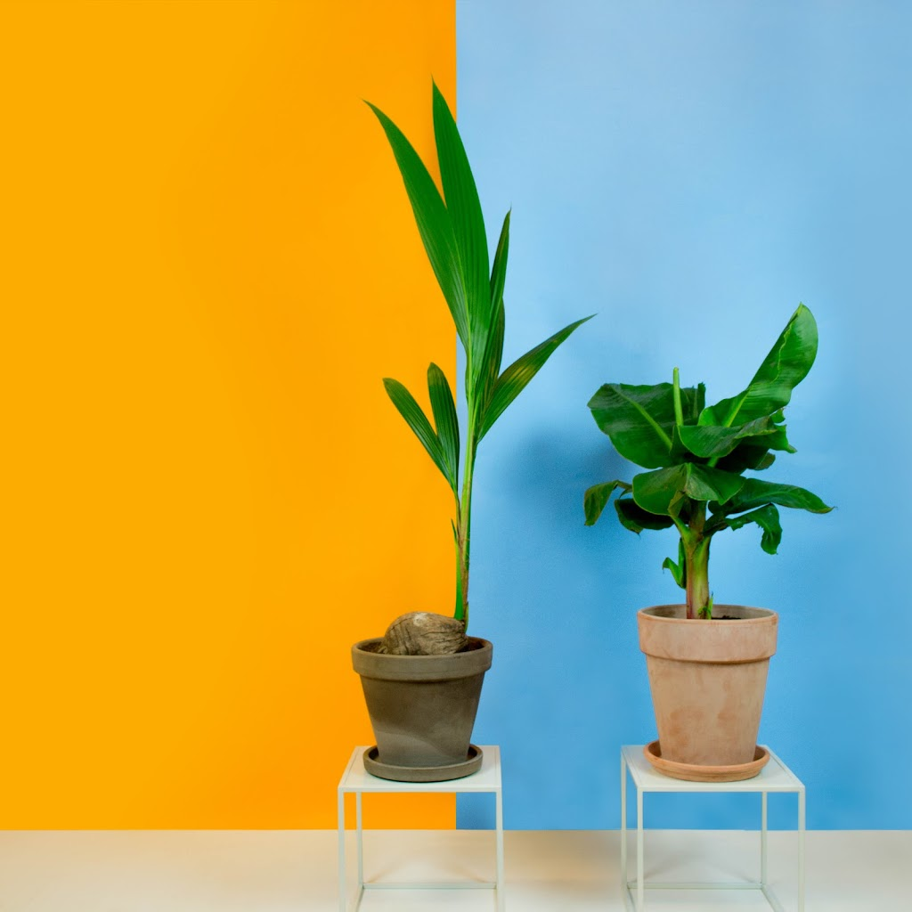 Bekijk hier de set Hortus Tropisch Duo
