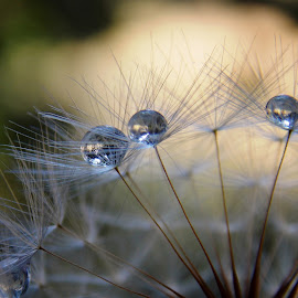 by OL JA - Nature Up Close Natural Waterdrops