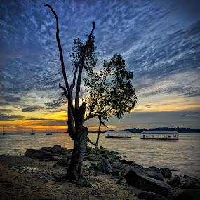 Tree of Enlightenment by Maskun Ramli - Landscapes Sunsets & Sunrises ( tree, sunset, sea, rock, beach )