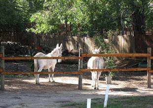 Photo: Hansel and Gretel - the Forest Edge donkeys