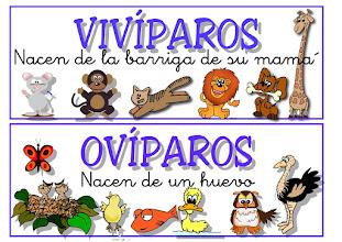 Photo: oviparos y viviparos