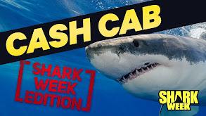 Shark Week Edition thumbnail