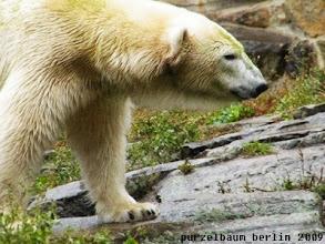 Photo: Gianna haelt derweil Ausschau nach Knut ;-)