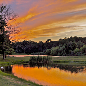 On Golden Pond by Susannah Lord - Landscapes Sunsets & Sunrises ( water, purple, sunset, reflected, pond, golden,  )