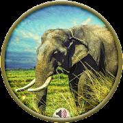 Elephant Sounds APK