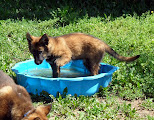 Photo: het is warm weer, dus lekker afkoelen in bad