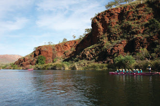 Photo: Following the other pink boat into the wilderness  photo by: Ave Gassman of the Kununurra Dragon Boat Club