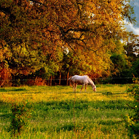 A Texas pasture by Brenda Shoemake - Landscapes Prairies, Meadows & Fields