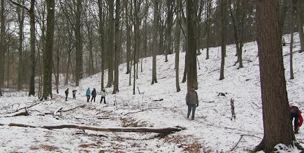 Photo: Rondebos - Wolfsbos bij Tomme (Ottenburg)