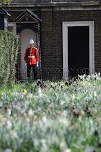 Photo: Guard on duty at St. James' Palace