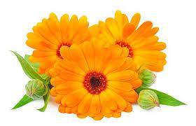 Những loài hoa tượng chưng cho tháng 10, tháng 11, tháng 12 có thể bạn chưa biết