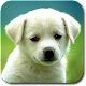 Animal Sounds & Ringtones (app)
