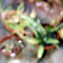 Photo: Rain