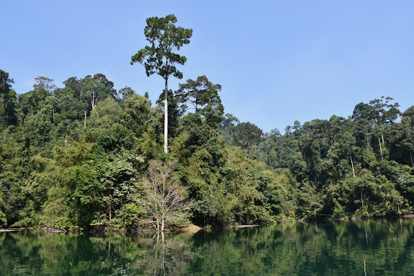 Enjoy the overwhelming atmosphere of the evergreen rainforest
