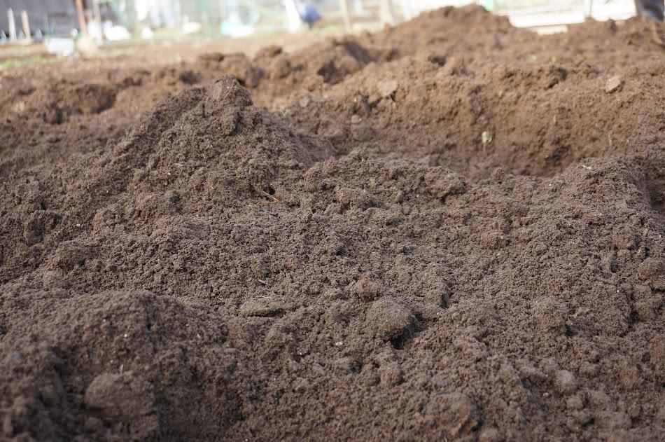 柔らかくなった土