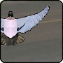 Pigeon   - bird  er