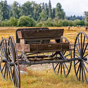 Old Amish Buggy by Twin Wranglers Baker - Artistic Objects Antiques (  )