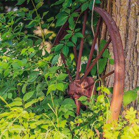 Hidden treasures. by Donna Sparks - Novices Only Objects & Still Life ( farm, old, wagon wheel, rusty )