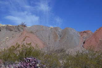 Photo: Even the starkest of desert terrian has hidden beauty!