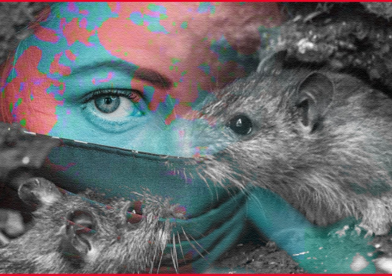 Can Rats Transmit Covid-19? Here's What Research Says.