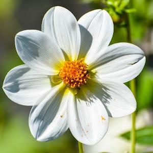 White flower orange pollen.jpg