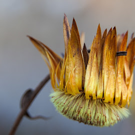 by Thomas Berwein - Nature Up Close Other plants
