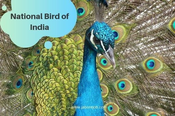National Symbols of India, National Peacock of India