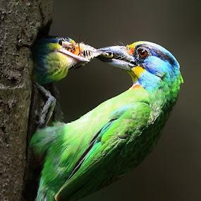 FEEDING by Tzong Lion T - Animals Birds