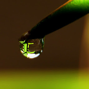 by Yulianto Efendy - Nature Up Close Water