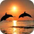Amazing Dolphins HD icon