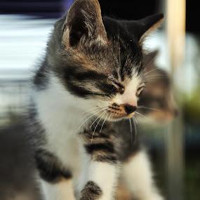 by Nydzam Ahmad - Animals - Cats Portraits
